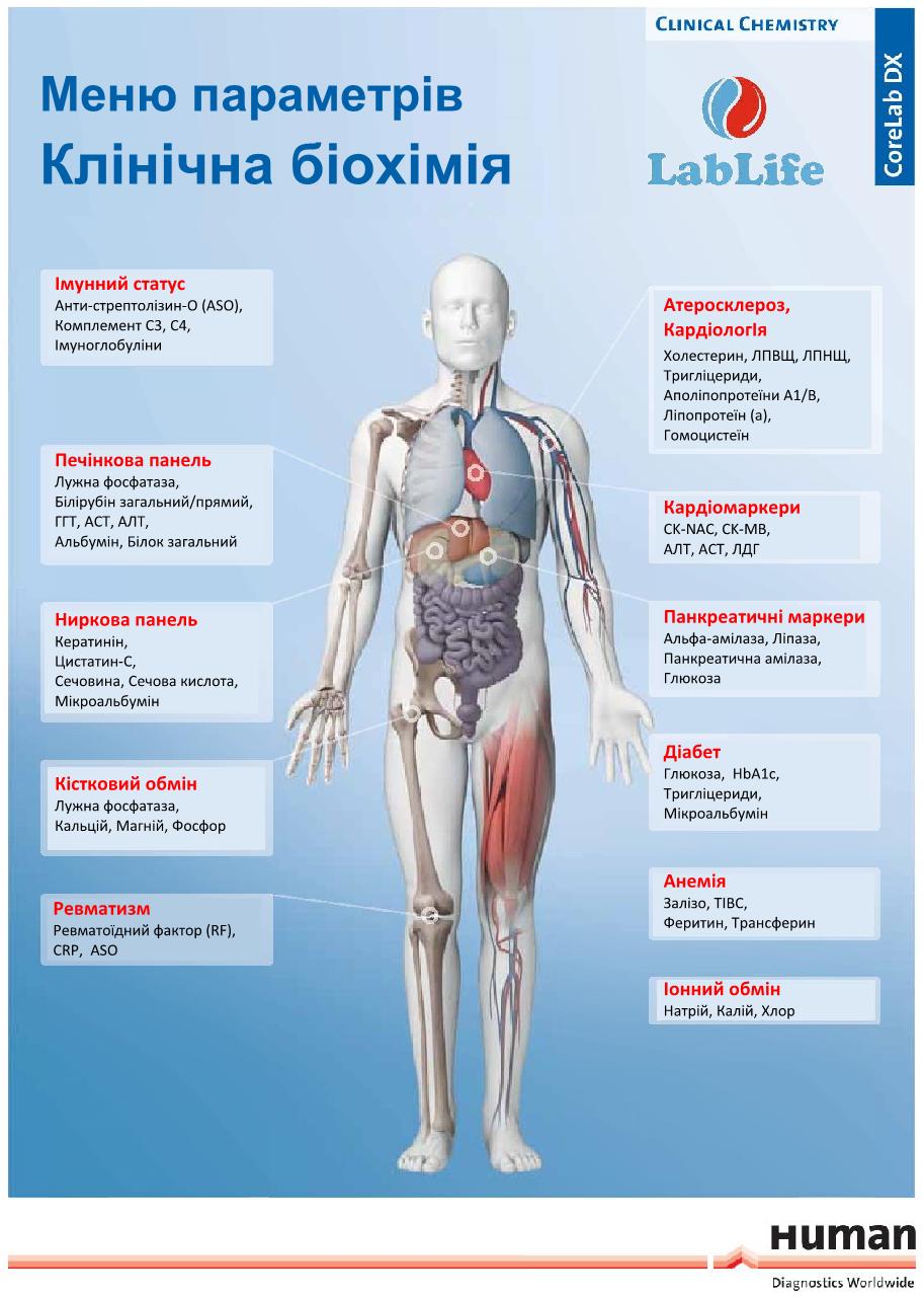 Метаболіти, фото №1